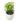 Syngonium podophyllum Pixie