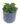 peperomia rana verda